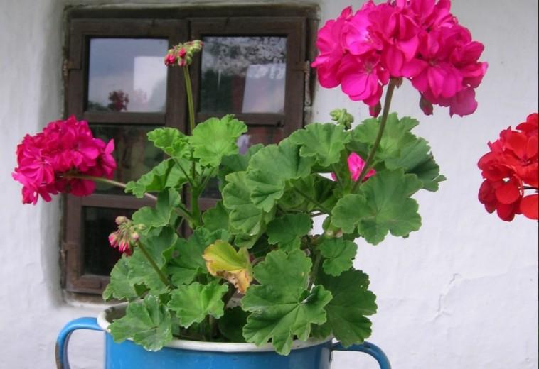 Hogyan teleltessük kinti cserepes növényeinket?