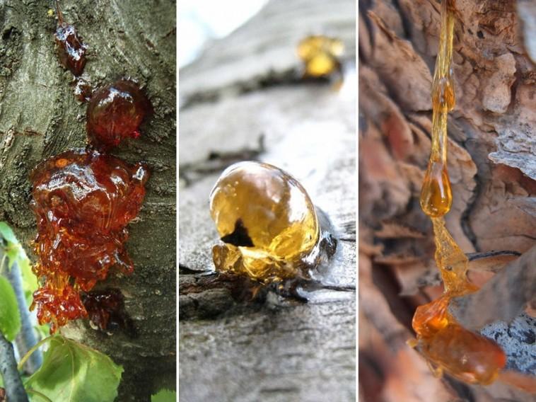 Mi okozza a gyümölcsfák mézgaképződését? - Bálint gazda..