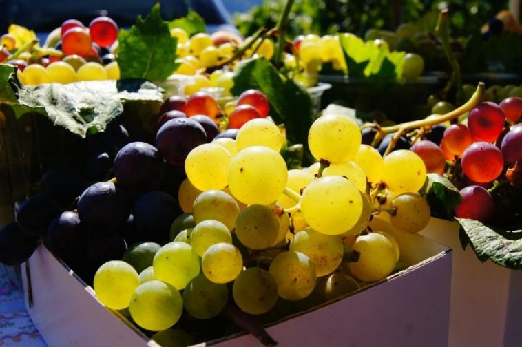 A szüret segédanyagai: mire ügyeljünk, ha bort készítünk?