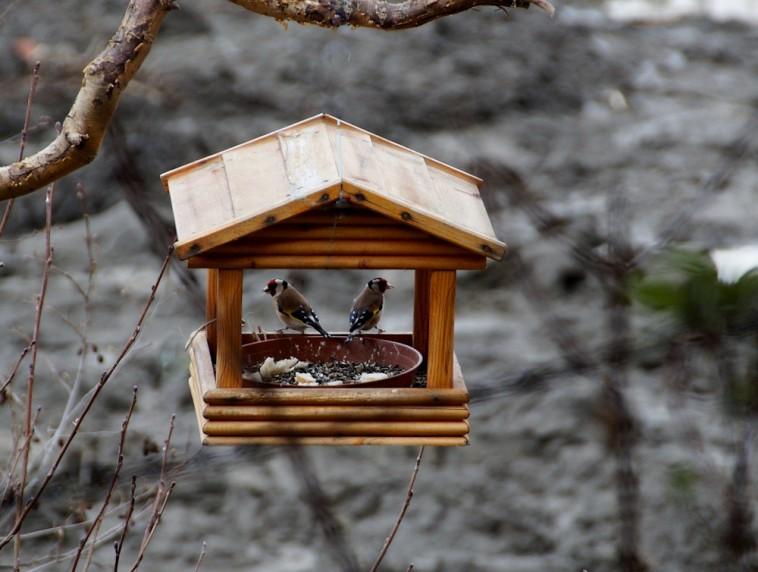 Ha elfogynak a kerti bogyók, éheznek a madarak