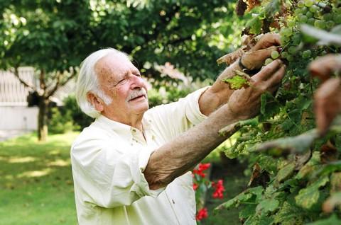 Bálint gazda vizsgálja a termést
