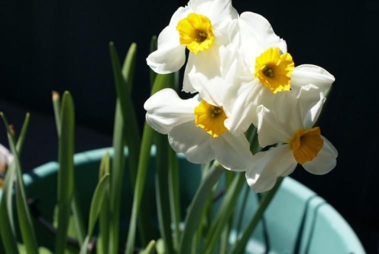 Még nem késő elültetni a virághagymákat