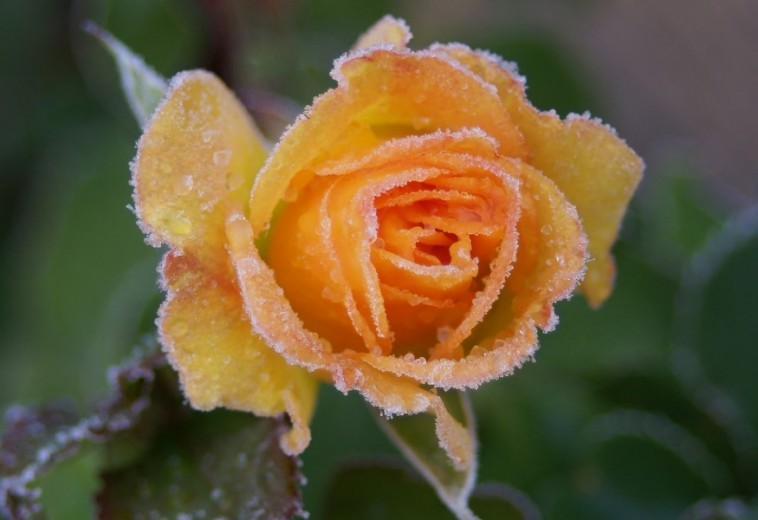Október harmadik hete: védd meg a fagytól a növényeket!