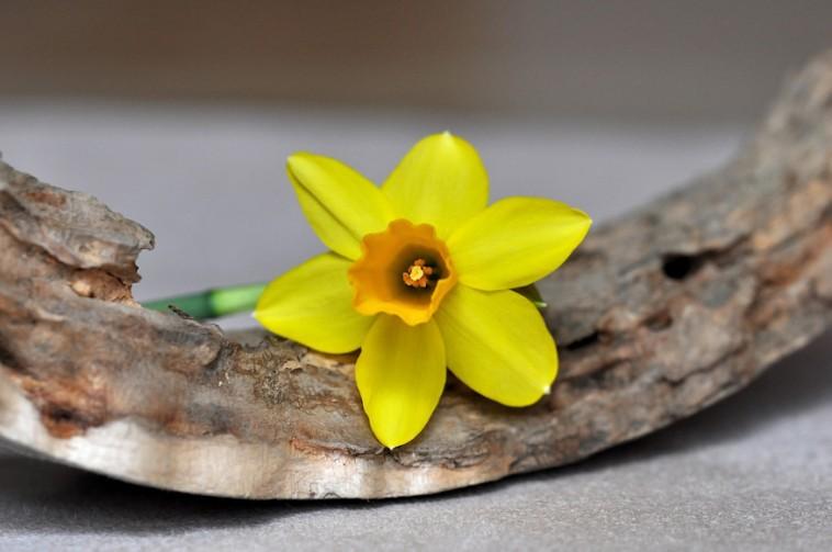 A virágok rejtett beszéde